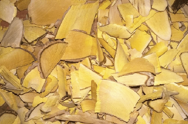 Rể cây mật gấu thường sử dụng để ngâm rượu trị bệnh rất tốt.