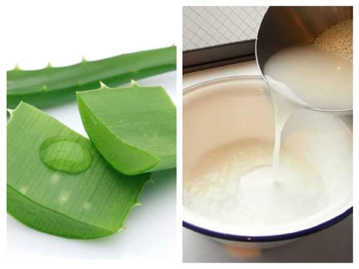 cách trị mụn bằng nha đam và nước vo gạo